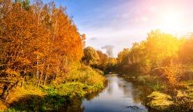 Underbart landskap med höstträd i skog, över floden Fotografering för Bildbyråer