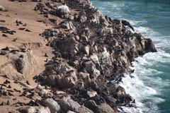Underbart landskap på den fotvandra slingan på den Robberg naturreserven i den Plettenberg fjärden, Sydafrika fotografering för bildbyråer