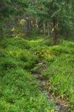 Underbart skogsmarklandskap med hunden, som döljer bland blått Arkivfoton
