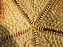 Underbelly of a starfish Stock Images
