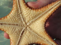The underbelly of a starfish Royalty Free Stock Photo