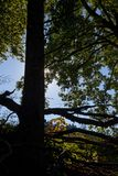 Underbrush и тени Стоковая Фотография RF