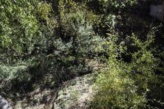 Underbrush Stock Photos