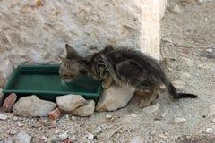Underfed kitten drinking water stock image
