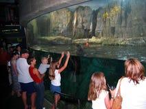 Underground aquarium of Sea Lions. Aquarium of the Pacific, Long Beach, California, USA royalty free stock image