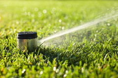 Underground sprinkler head spraying in the morning sunlight. An underground sprinkler head sprays in the morning sunlight Royalty Free Stock Photos