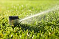 Underground sprinkler head spraying in the morning sunlight Royalty Free Stock Photos
