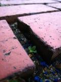 undergrowth жизни Стоковые Фото