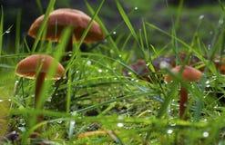 Undergrowth fotografia de stock