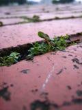 undergrowth 2 жизней Стоковые Изображения