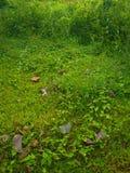 undergrowth Стоковая Фотография