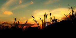 Undergrowth 3 da grama fotografia de stock