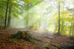 Undergrowth da floresta imagens de stock