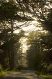 Undergrowth da manhã imagem de stock