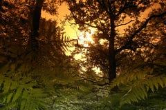 Undergrowth e fern na floresta francesa imagens de stock