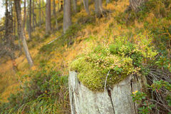 Undergrowth Royalty Free Stock Photography