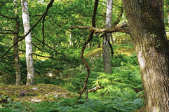 Undergrowth in Fontainebleau forest stock image