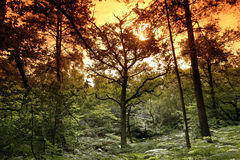 Undergrowth in Fontainebleau forest Stock Images