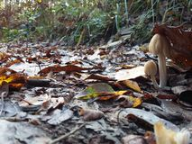 Undergrowth fungus Stock Photography