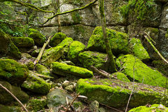 Undergrowth with Green Moss Royalty Free Stock Images