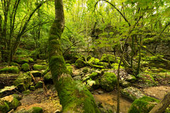 Undergrowth with Moss and Creek Royalty Free Stock Photo