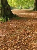 Undergrowth no outono Foto de Stock