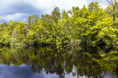 Undergrowth and roots of Mangrove stock photos