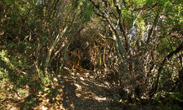 Undergrowth and scrub in Corsica montains Royalty Free Stock Photo