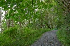 underhållen bana till och med skog Arkivfoton