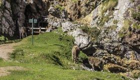 Underjordisk min, La Mina de Buferrera, Picos de Europa, Asturias, Spanien royaltyfri foto