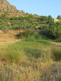 Underjordisk vår som ger frodig vegetation Royaltyfri Fotografi