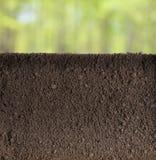 Underjordiskt avsnitt för jord eller för smuts i trädgård eller skog royaltyfri foto