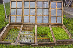 Underjordiskt grönt hus Royaltyfri Foto