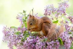 Underlag av blommor Fotografering för Bildbyråer