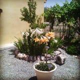 Underlag av blommor royaltyfri foto