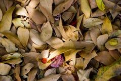 Underlag av torkade leaves Royaltyfri Bild