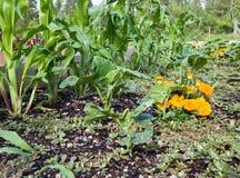 underlaget lyftte grönsaker Royaltyfri Foto