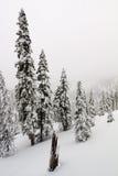 underland för häftig snöstormliggandevinter Fotografering för Bildbyråer
