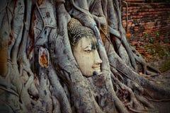 Underna av Buddha huvud ?r i tr?den arkivfoto