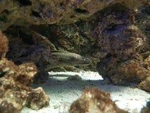 Underna av den undervattens- världen Arkivfoton