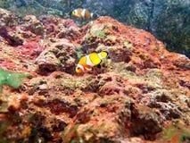 Underna av den undervattens- världen Royaltyfri Fotografi