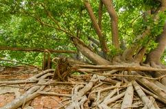 Underna av naturen Arkivbild