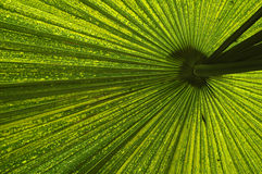 Underneath a green leaf Royalty Free Stock Image