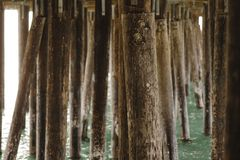 Underneath a pier with the sea. Rows of wooden pier pylons under a pier with ocean royalty free stock image