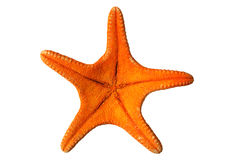 Underneath starfish. The underneath of an orange starfish, isolated on a white background Royalty Free Stock Images