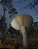 Underneath the toad stool. Toad stool in the evening stock photography