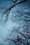 Underneath the trees. Look up picture stock photography