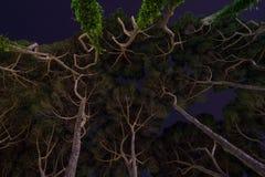 Underneath Trees Stock Image