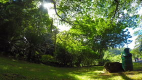 Underneath Tropical Trees at Waimea Park. A wide low angle view under tropical trees in Waimea Park stock video footage