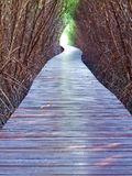 Underpass of dead trees Royalty Free Stock Photos